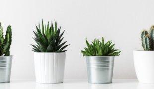 Las 6 plantas más fáciles de cuidar   Doncella Blog